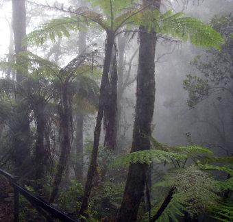 Forêt tropicale dans les nuages